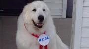 Perro elegido alcalde de un pueblo de EE.UU