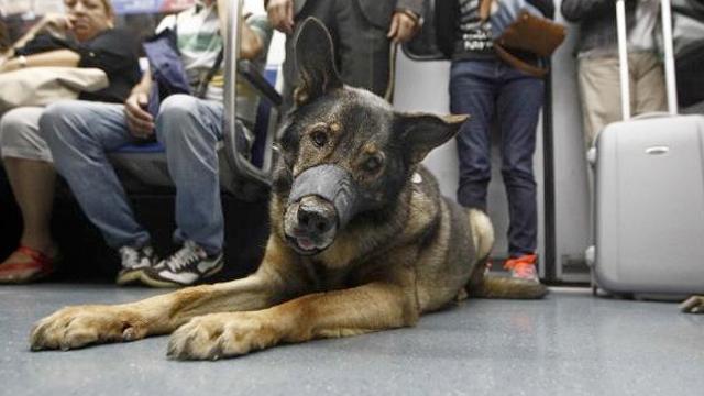 fotos-de-perros-en-el-metro-de-barcelona