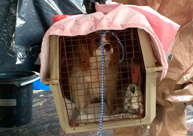 perro-bentley-traslado-a-otra-ubicacion