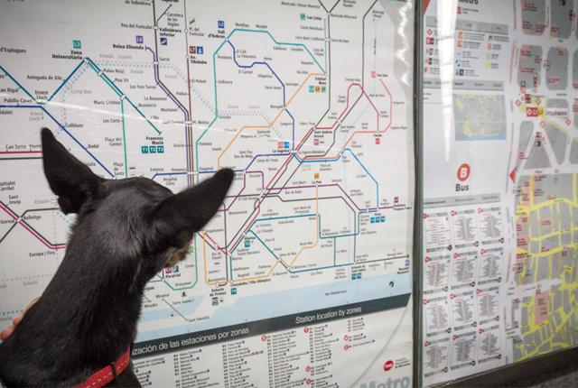 perros-metro-de-barcelona-2014