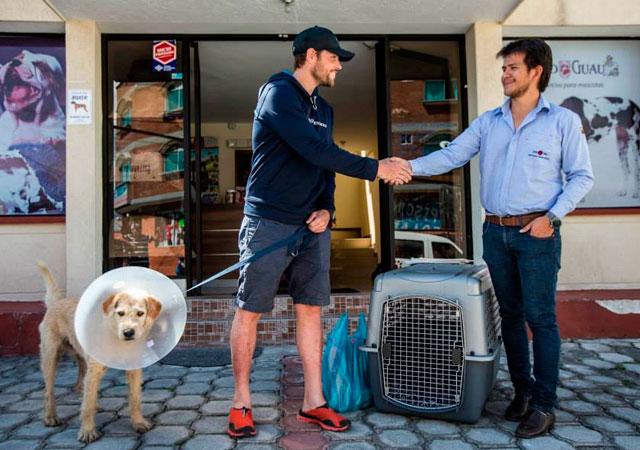 perro-callejero-ecuador-maraton