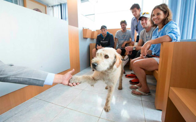 perro-encontrado-selva-ecuador-adoptado
