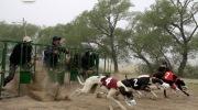 Santa Fe: con una ley que prohíbe las carreras de perros