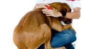 Navidad: Por qué los perros temen a los petardos?