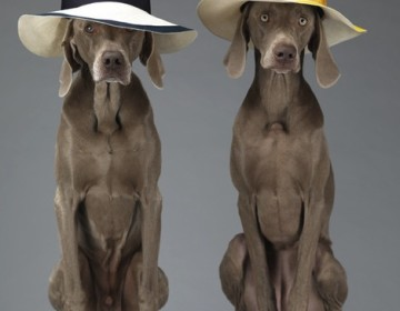 William-Wegman_2