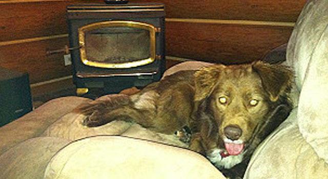el-perro-callejero-mas-caro-del-mundo