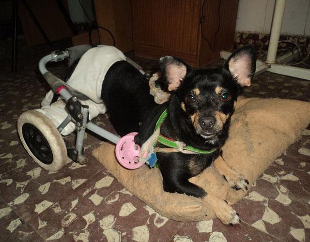 perra-discapacitada-abandonada-argentina