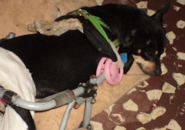 perra-lola-discapacitada-argentina
