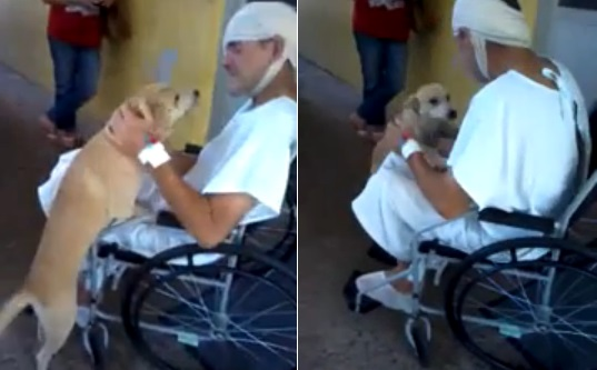 perro-espera-8-dias-fuera-hospital-brasil