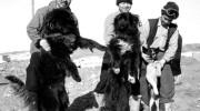 La increíble historia de Jiro y Taro, los perros más famosos de Japón